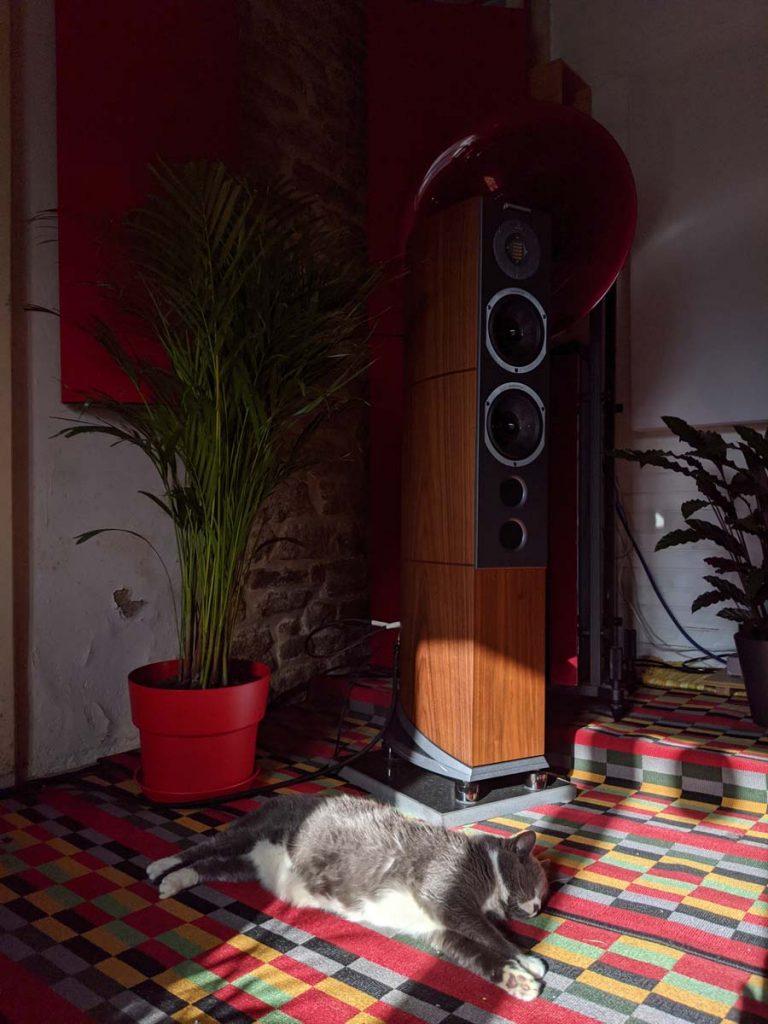 Audiovector R6 Ali Cat